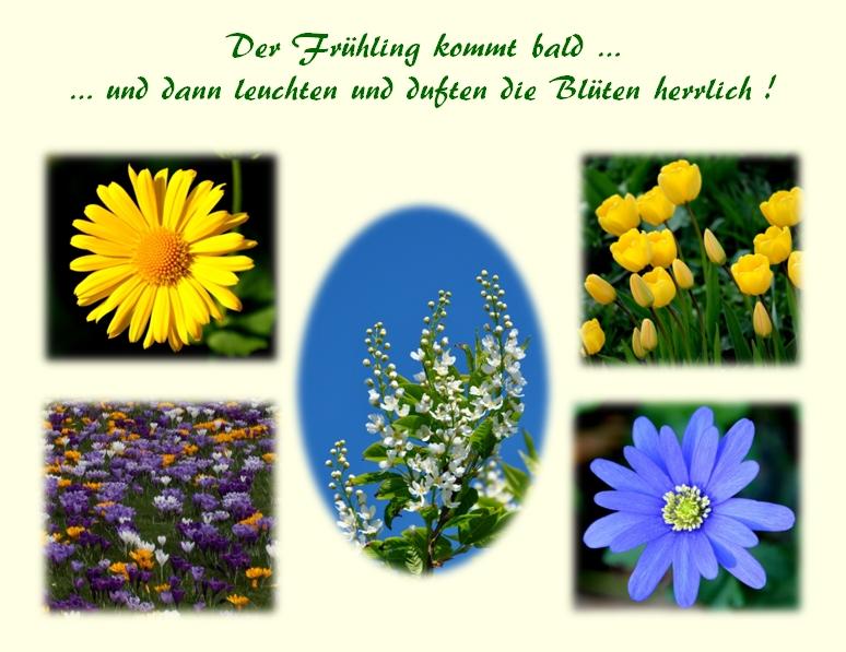 Frühlingsträume ...