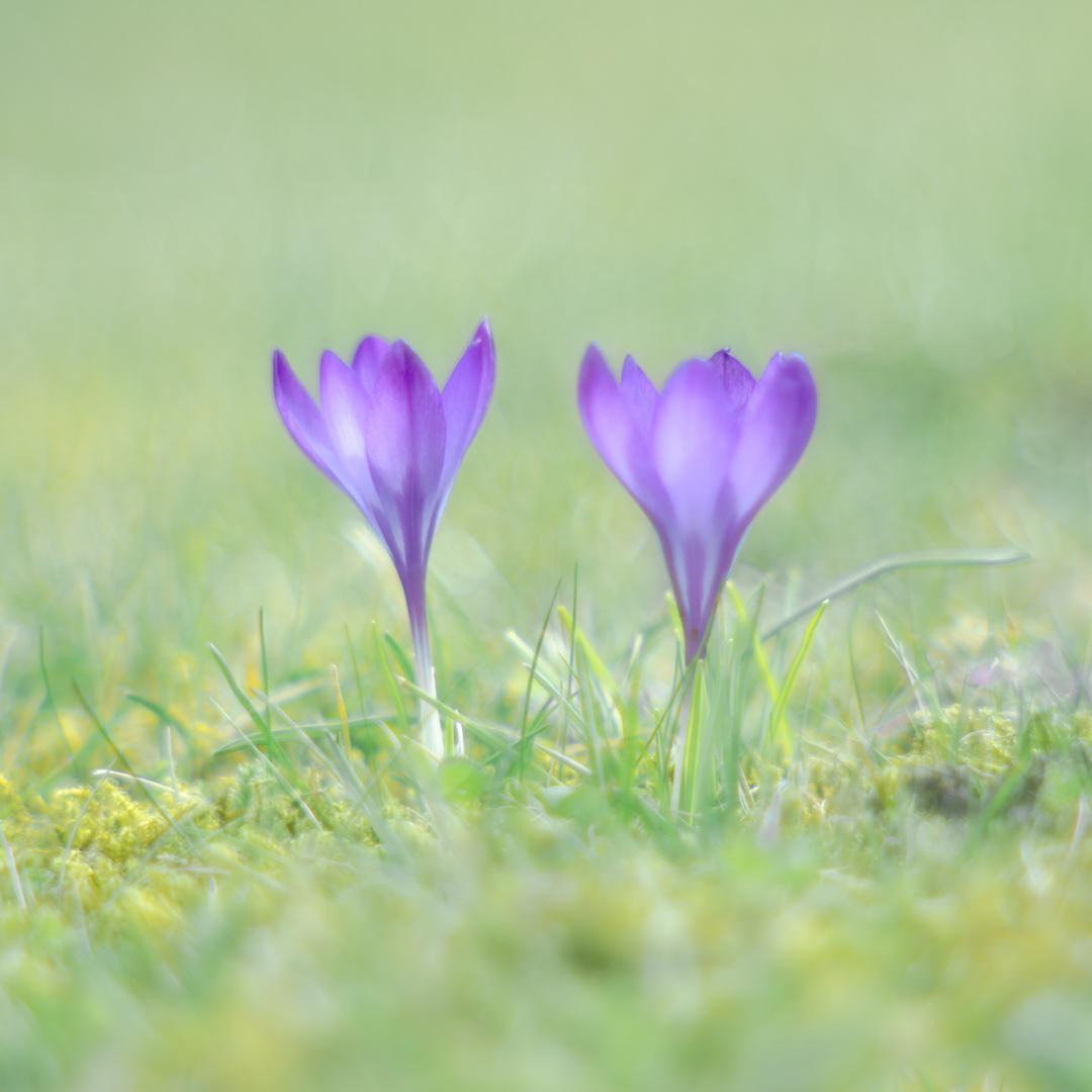 Frühlingsträumer