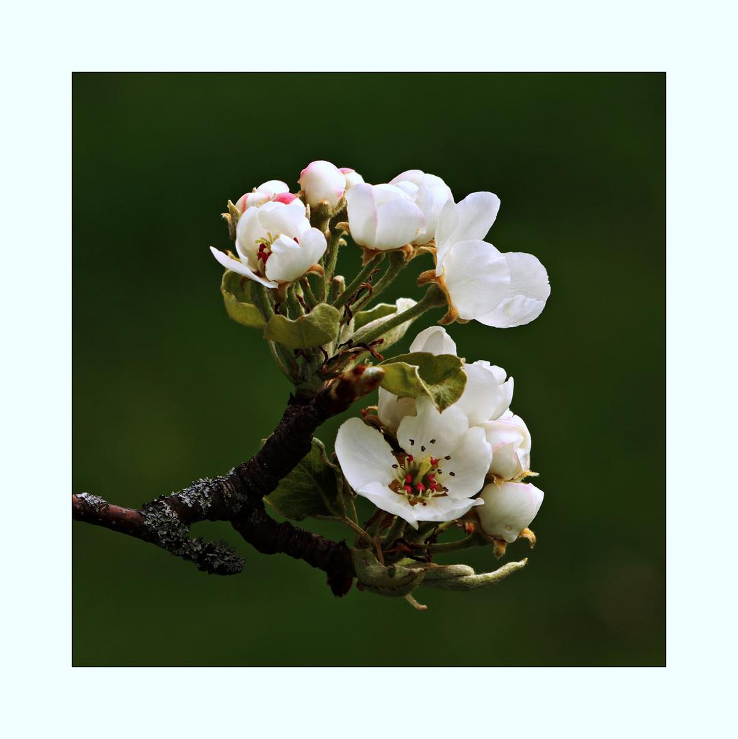 Frühlingstraum (1)