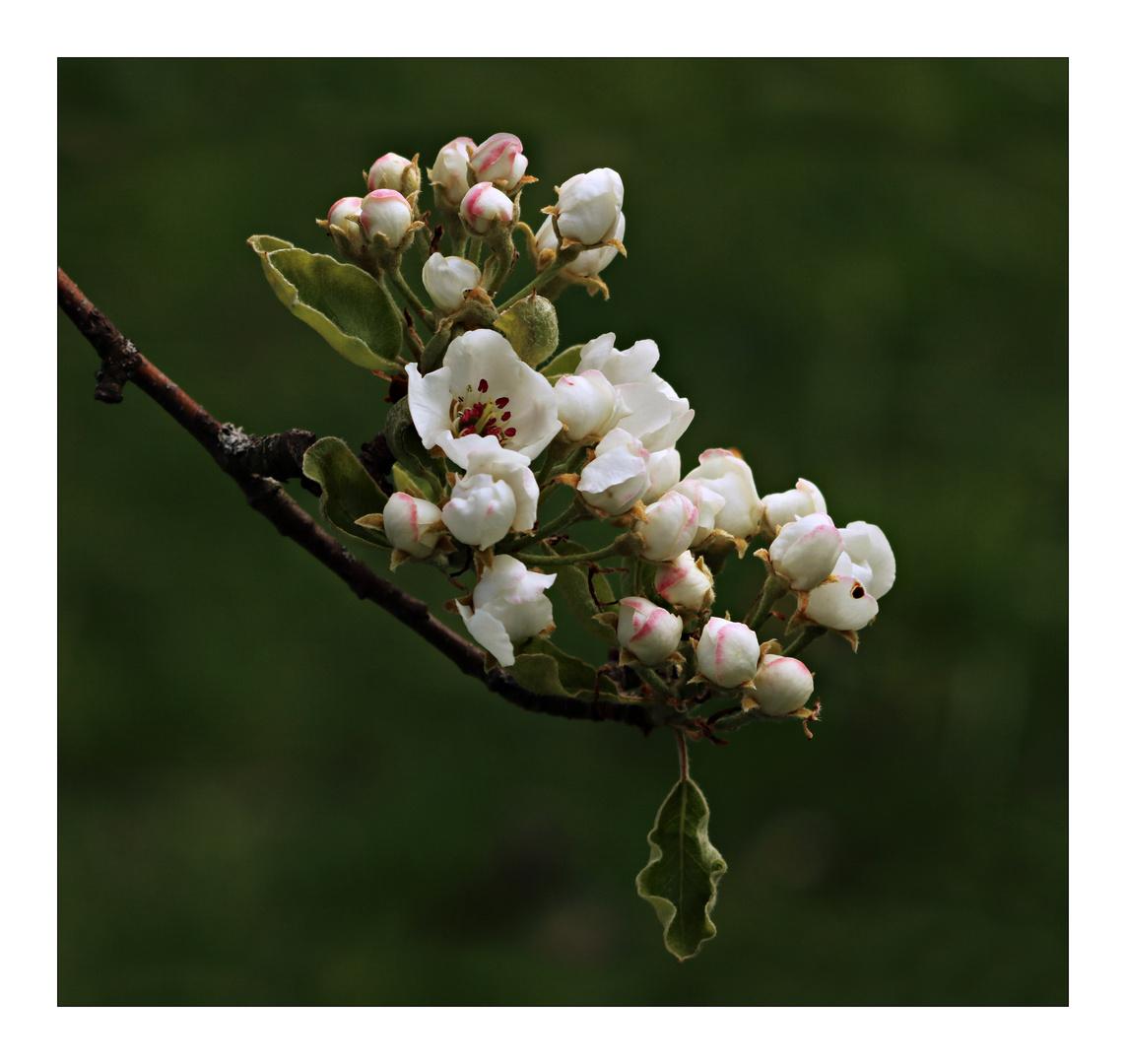 Frühlingstraum (2)