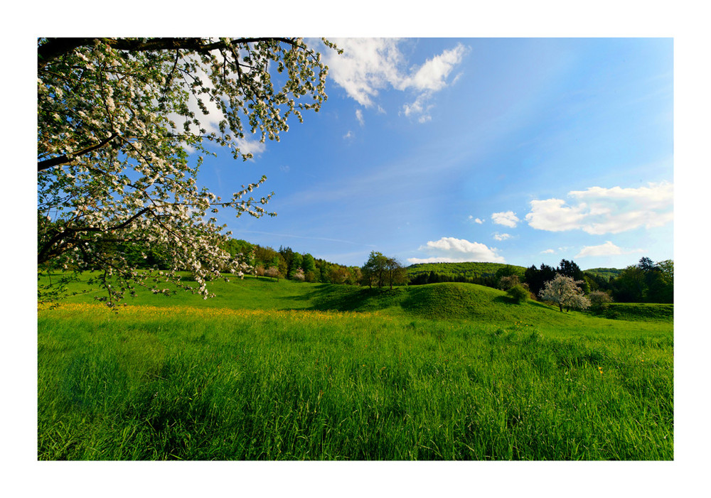 ... Frühlingstraum ...