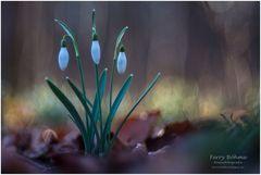 Frühlingstrio ...