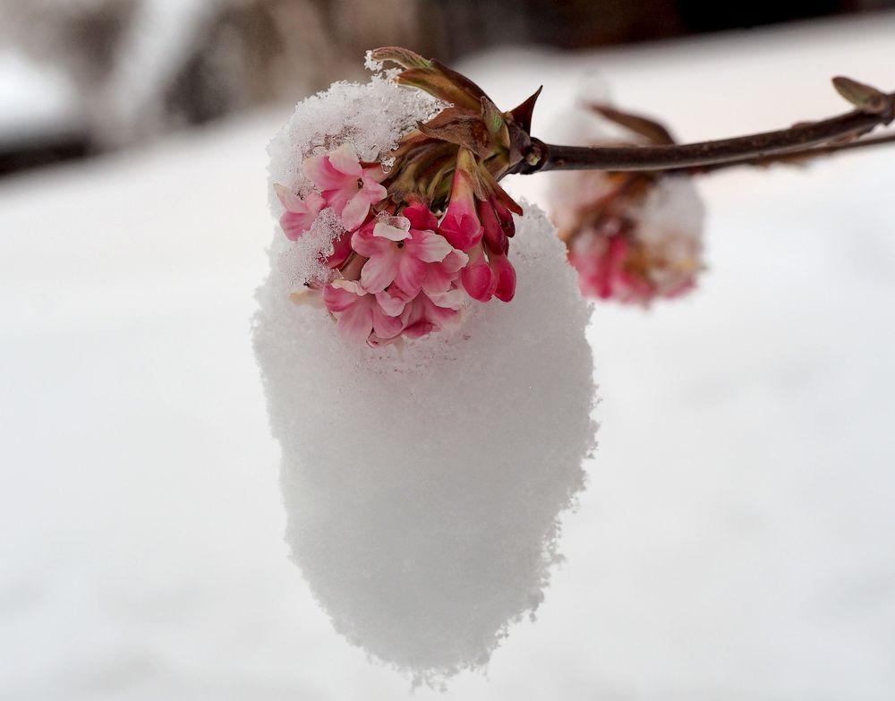 Frühlingsversprechen am Ende des Winters... - Promesse du printemps à la fin de l'hiver...