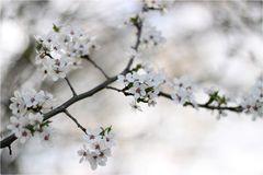 Frühlingsvorfreude