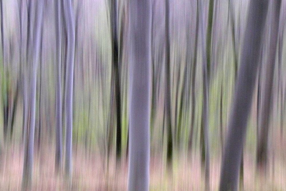 Frühlingswald 1