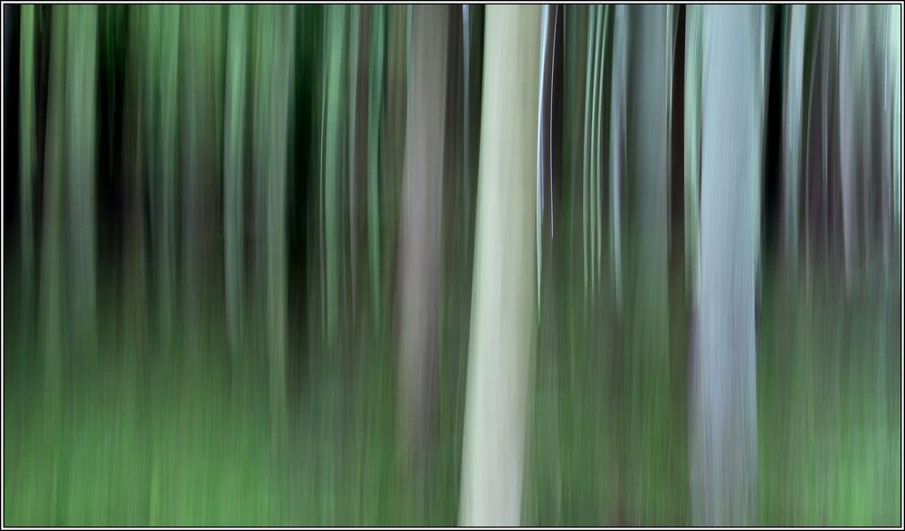 Frühlingswald 10
