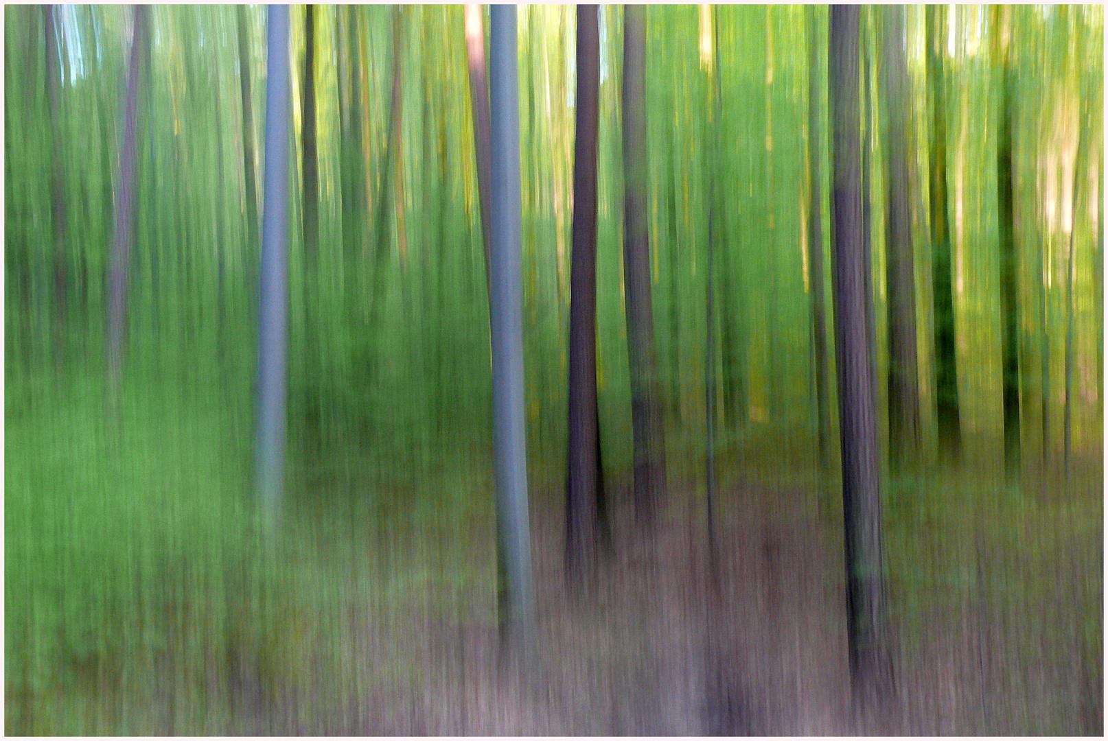 Frühlingswald 11