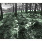 Frühlingswald (2)