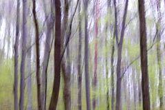 Frühlingswald 2