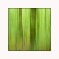 Frühlingswald 3