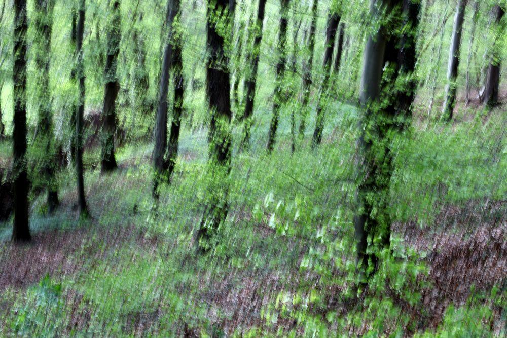 Frühlingswald 5