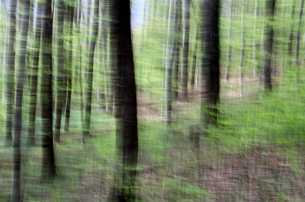 Frühlingswald 6