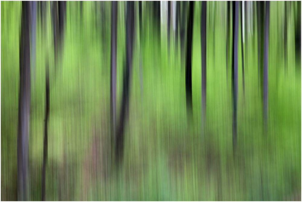 Frühlingswald 7