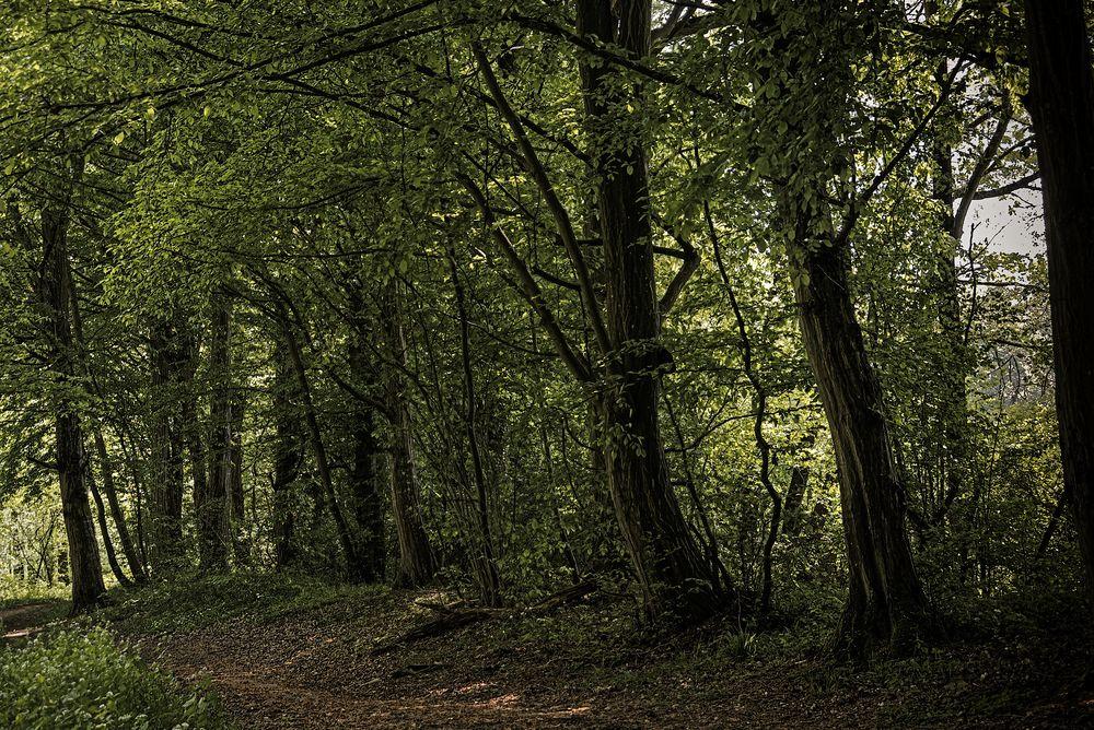 Frühlingswald ....