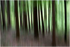 Frühlingswald 9