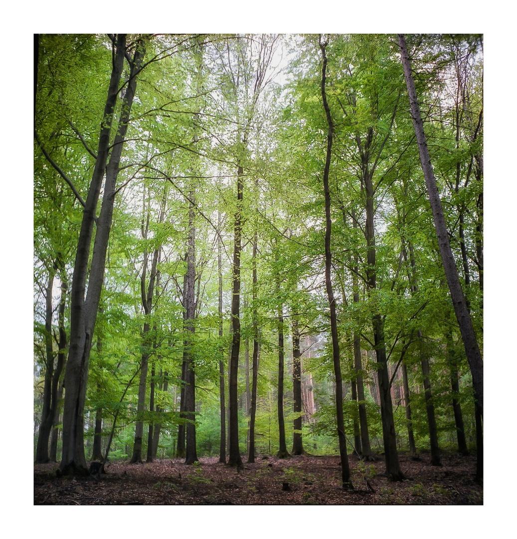 Frühlingswald analog
