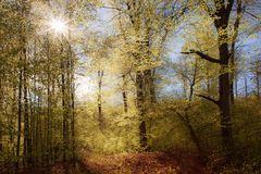 Frühlingswald ...
