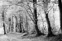 Frühlingswald sw
