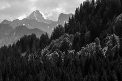 Frühlingswald und Hochgebirge