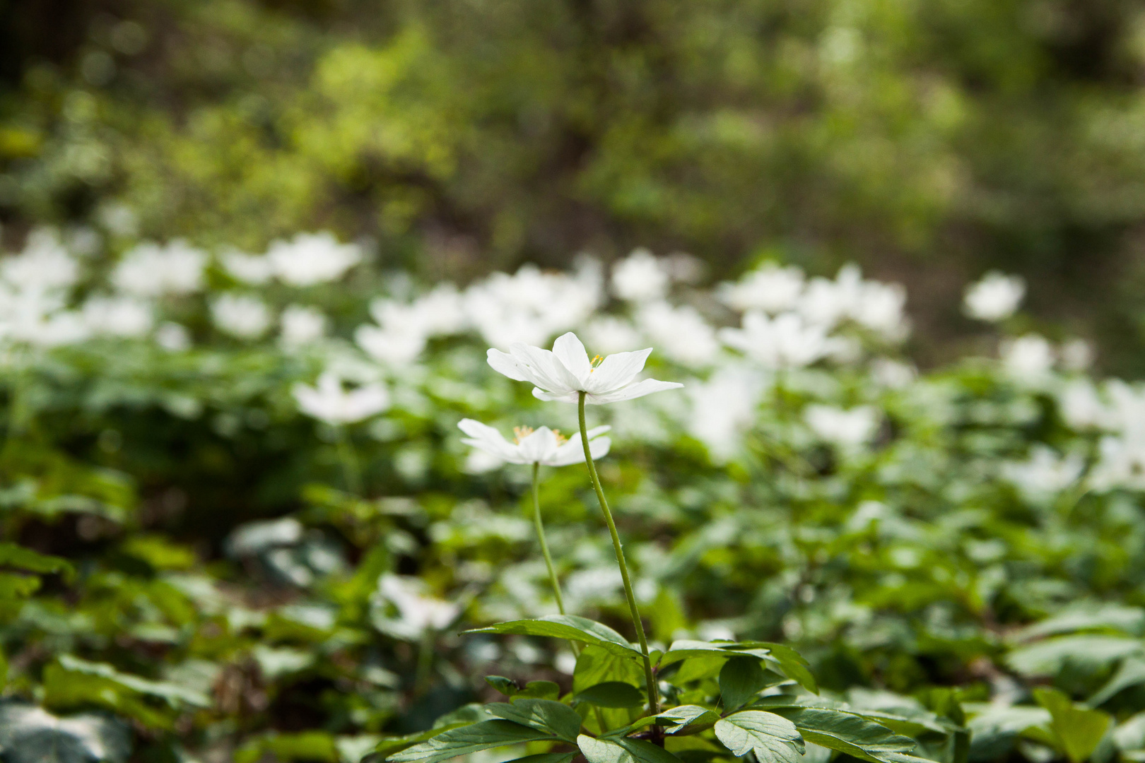 Frühlingswaldboden