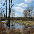 Frühlingswanderung im Hohen Venn (Belgien)