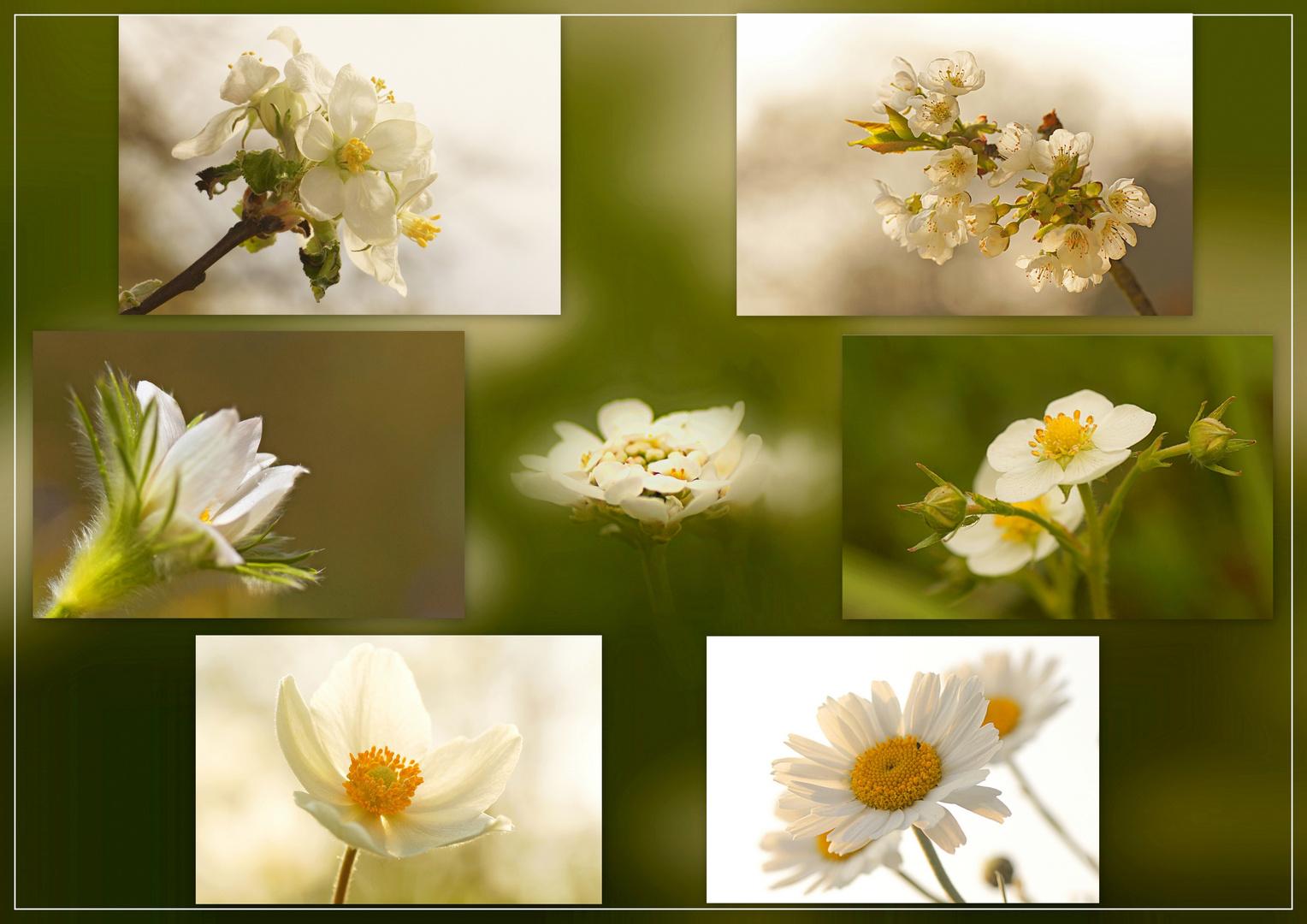 Frühlingsweiß .......