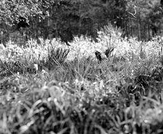 Frühlingswiese am Albtrauf