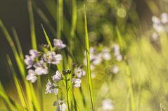 Frühlingswiese II