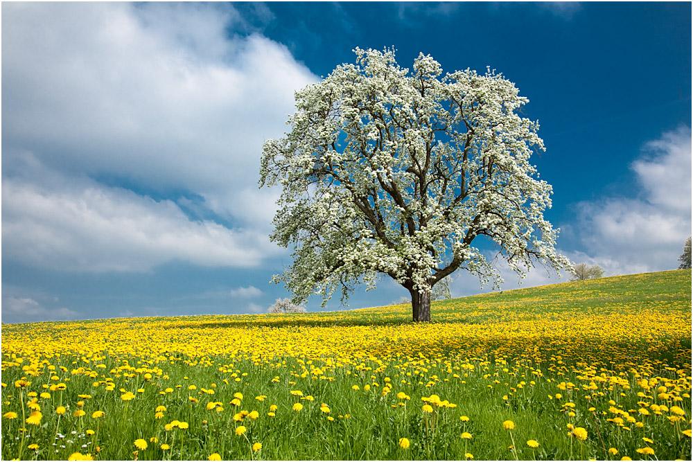 Frühlingswiese im April