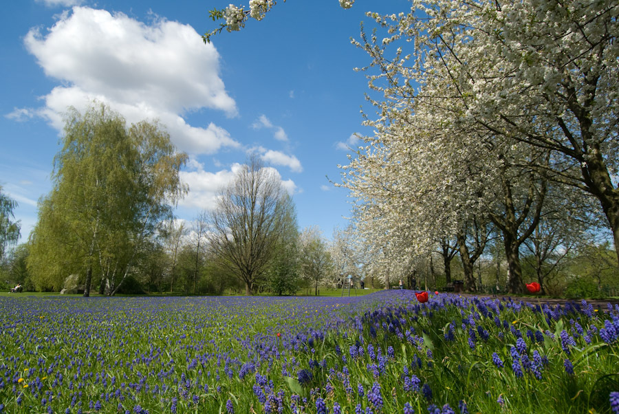 Frühlingswiese im Britzer Garten