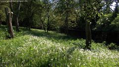 Frühlingswiese in Essen-Stadtwald.