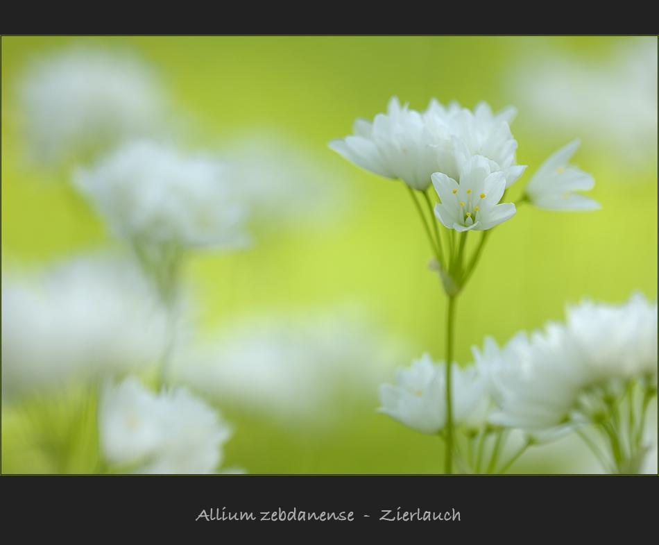 Frühlingswiese X
