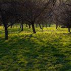 Frühlingswiesenlicht