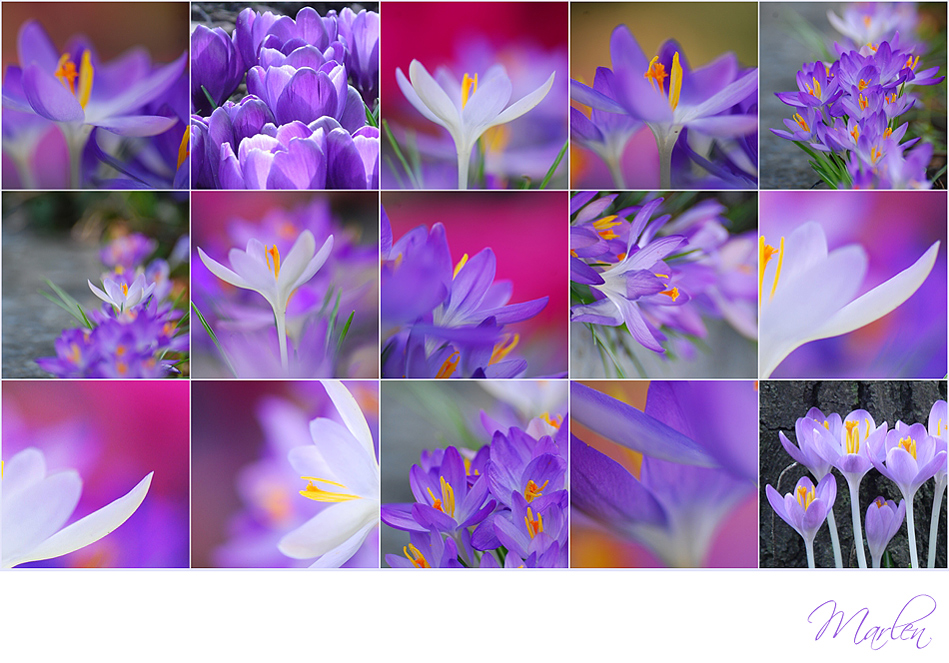 FrühlingsWonne