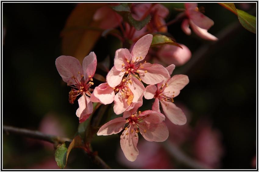 Frühlingszauber...