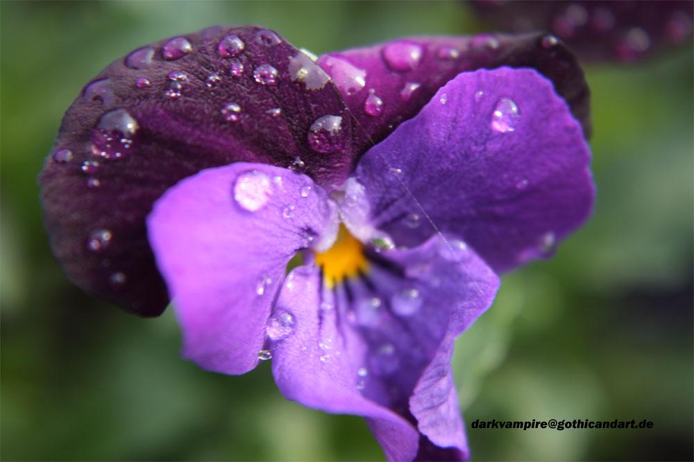 Frühlingszeit der Blumen