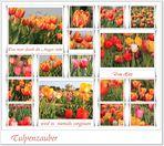 Frühlingszeit -Tulpenzeit
