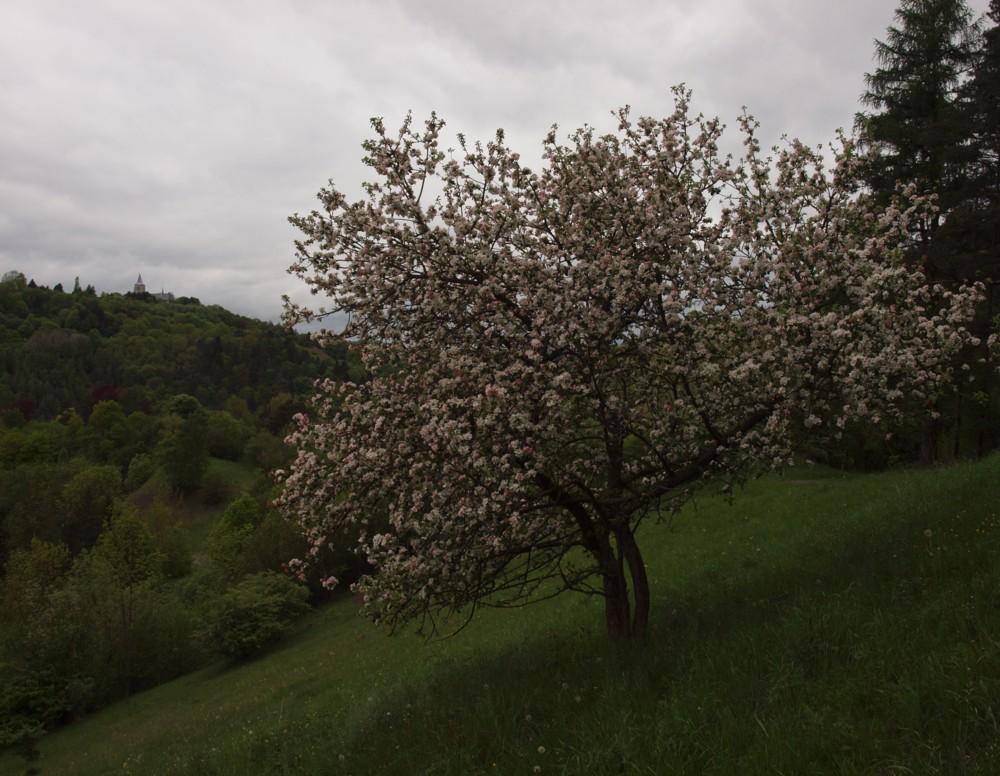 Frühlng 2013