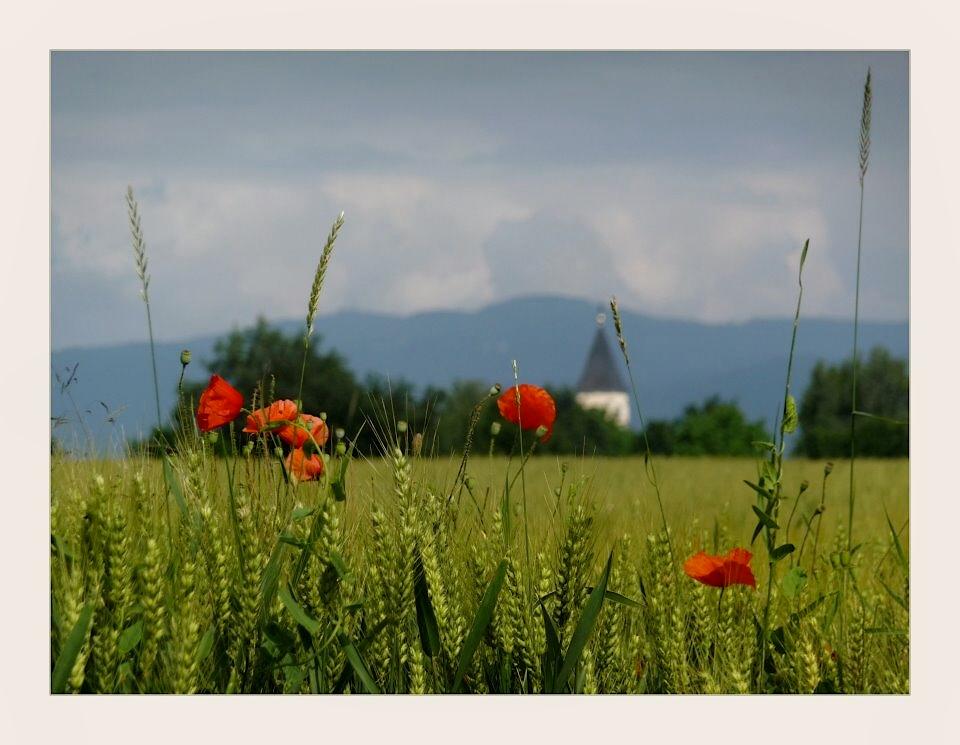 Frühsommer im Oberrheintal