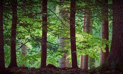 Frühsommer im Wald