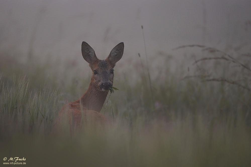 Frühstück im Nebel...
