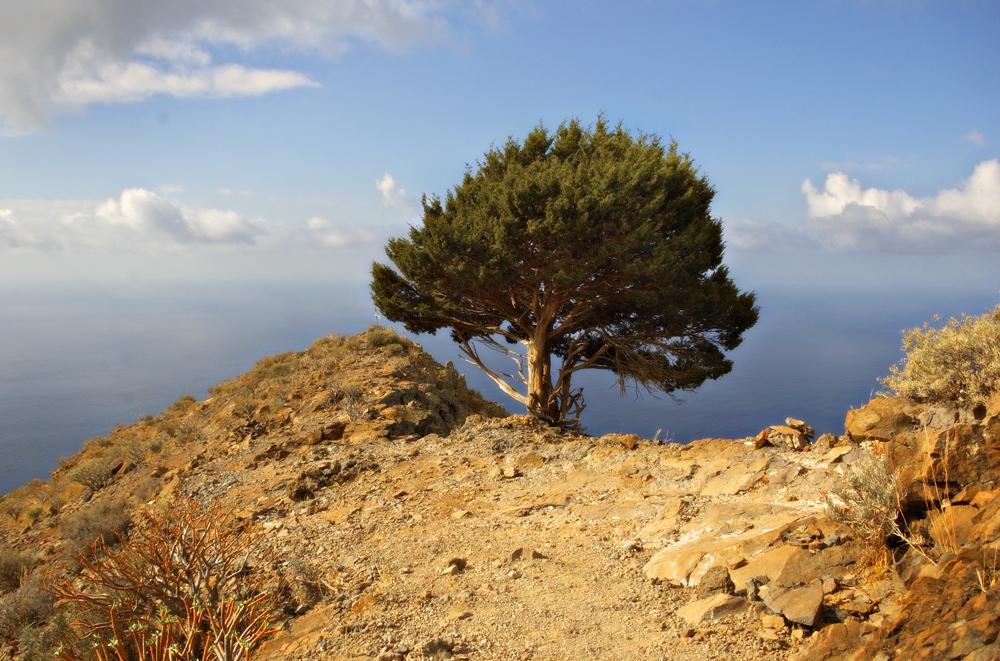 Frühstücksbaum, La Merica, La Gomera