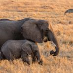 Frühstückszeit in der Masai Mara