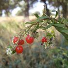 frutas del bosque...FERNANDO LÓPEZ   fOTOGRAFÍAS...