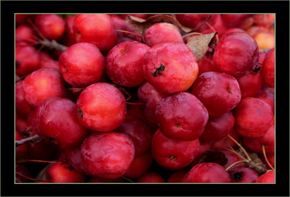 Frutitas  pequenias