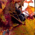 Frutta di stagione passata