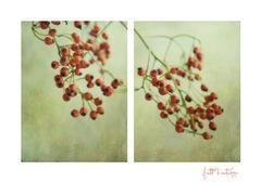 Frutti d'autunno