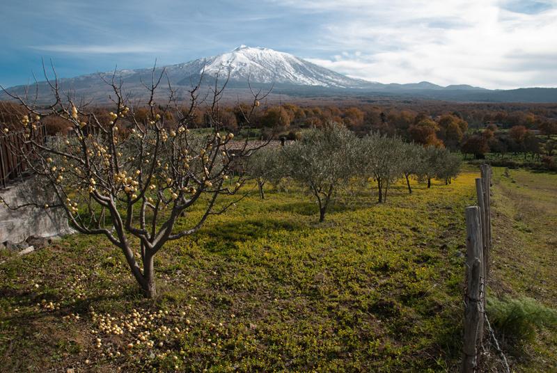 Frutti dell'Etna