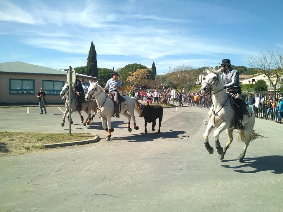 Fête taurine, Bagard (Gard)
