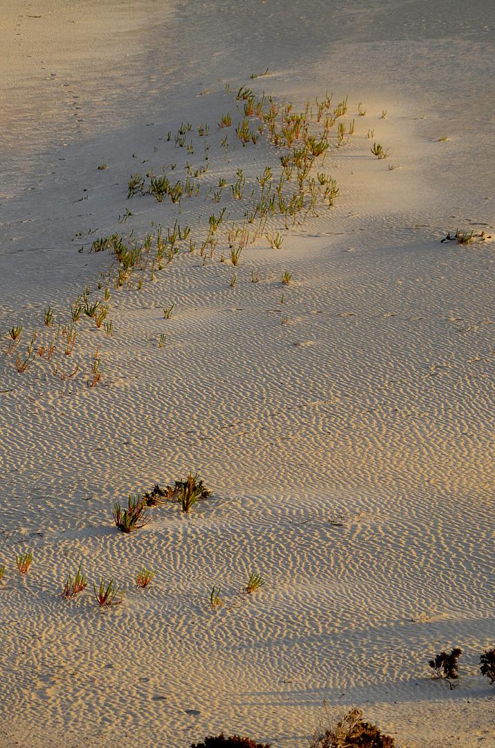 Ftv deserto..
